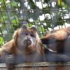 無料の動物園、夢見ヶ崎動物公園でけものフレンズに会ってきたよ!