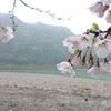 2020  熊野川 サツキマス釣行