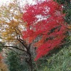 神戸)紅葉の残る六甲山麓。渦森台→高羽道→六甲ケーブル下→阪神石屋川駅。
