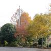 小さな校庭の秋の彩り