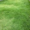 芝刈りしました 2020年9月