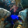 サンシャイン水族館が7月から値上げ!安く入るならデイリーplusよりメルカリがオススメ【裏ワザ】