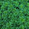 【微気候】=庭の植生から屋内に「涼」を導くパッシブデザイン。
