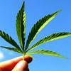世界的な大麻解禁の動きを見ても、日本の警察がやっきになって取り締まるほど、危険な薬物だとは思えない大麻 ~西洋医学の薬が、ほとんど必要なくなる「神の植物」~