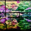 【秋の京都】瑠璃光院で紅葉狩り