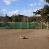 犬専用総合ケアハウス・老犬ホームあん 誕生^^