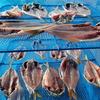 釣った魚での干物の作り方|アジとムツを干したら激ウマだった!