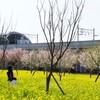 川和町〜柿生麻生川