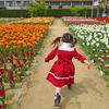 ≪千葉匝瑳市≫そうさチューリップ祭り2019
