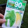 白菜・キャベツの種まき