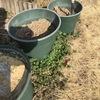 モミガラ堆肥を使ってみよう