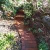 元気に庭仕事・・・猫たち