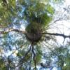 雑木林を360で撮ってみるとすごいことになる! #360pic