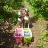 ワンコのブルーベリー狩り スナップ 7月13日