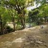 浜松城公園の生き物たち