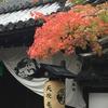 京都・紅葉散歩🍁洛東編 -天授庵の紅葉-