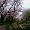 近所の桜並