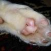 自由猫ウメの肉球を写真に撮ってみたが肉球占いでどれに属すかわからない。