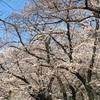大分県から福岡県の旅 アマネリゾートガハマ②