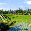 バリ島旅行が最高に楽しかったから観光スポットを完全リポートしていく