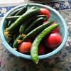 夏野菜は順調です