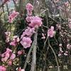 【静岡】熱海・熱海梅園と熱海城からの風景が良かった(時期:2月)