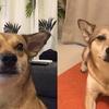 犬も顔が変わる!カンナのビフォア&アフターを見ておこう