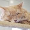 職員室でネコを飼うべき10の理由