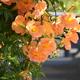 夏の花をきみに