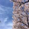 今日の景色 04/12 ソメイヨシノ