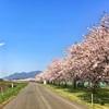 千曲川堤防桜堤をジョギング