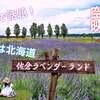 千葉絶景【佐倉ラベンダーランド】ドローン空撮!気分は北海道