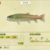【あつ森】3月中に絶対釣っておくべき魚&虫ランキング 〜北半球編〜【あつまれどうぶつの森】