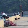 エギングIN平戸!待ちに待った第二回インスタ交流会!の前にプラクティスしてたよ🎵海王類にはご注意を・・・ホゲホゲの実。