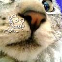 にゃんこ指定。<Cat of Roux.>