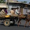 【衝撃】まるで動物園!?インドの町中で出会った動物たちまとめ