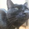 今日の黒猫モモ&白黒猫ナナの動画ー1055