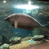 海から400km離れた素敵な水族館、ダラス・ワールド・アクアリウム(その1)