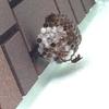浜松市東区で壁面にできた蜂の巣を駆除してきました