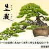 "<span itemprop=""headline"">第11回アジア太平洋盆栽水石大会!</span>"