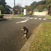 犬と歩いています
