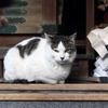 松乃木大明神の猫に年末のあいさつ