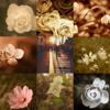 アメブロ、Instagram、Facebookに「Poemin」さんの詩をご紹介しました。