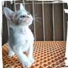 ダンス教室へ通う⁉️子猫のチビ太