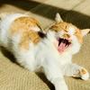 【猫学】子猫の飼い主さん必見!猫の乳歯から永久歯への生え変わりをご存知ですか?