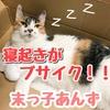寝起きがブサイクな猫!末っ子あんずの画像集!普段は可愛いよ?