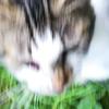 近すぎてしっかり写真が撮れない猫(ぷにミ)