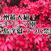 2018年 糸島のツツジ園    浮嶽幸花樹園さんの本キリシマは九州最大級規模
