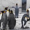 冬の旭山動物園と旭川空港