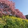 南伊豆の桜祭りへお散歩に・・・